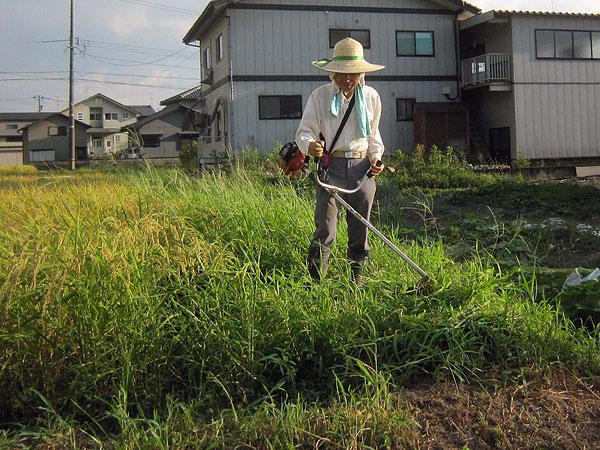 炎天下での作業は疲れる。でも、稲刈りが近いので畦周りをきれいにしておかなければならない。
