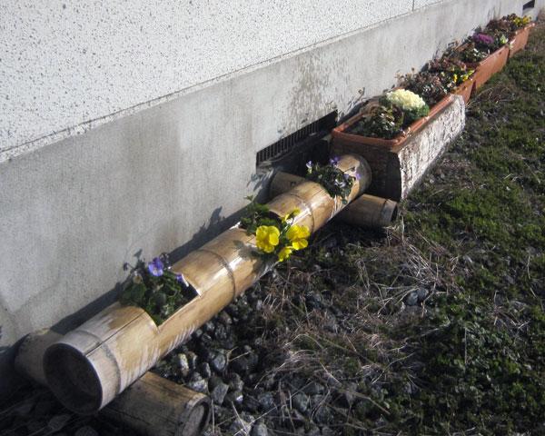 寒さに耐えて集会場の周りで咲く花々。