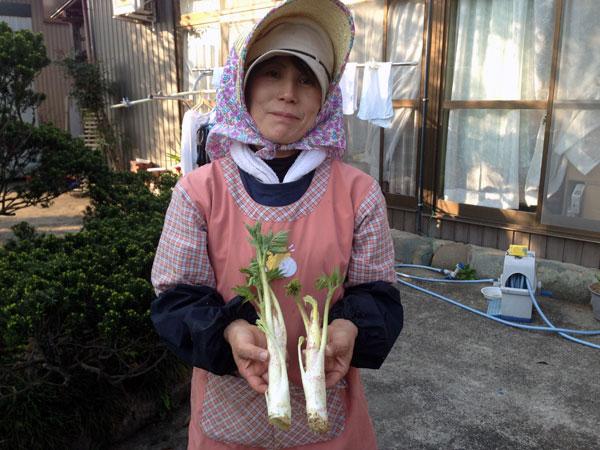 3年ほど前に出向いた県主催の『山菜講座』でいただいた「うど」がようやく収穫できるようになった。早速、夜調理していただいた。