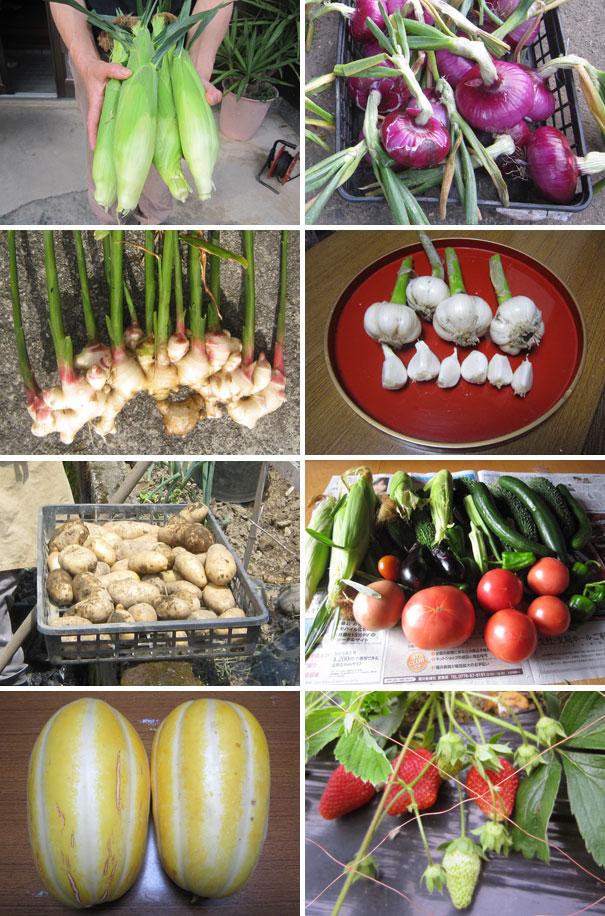 我が家で収穫した作物達。いずれも食卓を賑わしてくれた。ありがとう!!