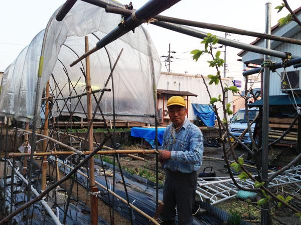 苗はまだ植えてないが、トマトのビニールかけ作業。