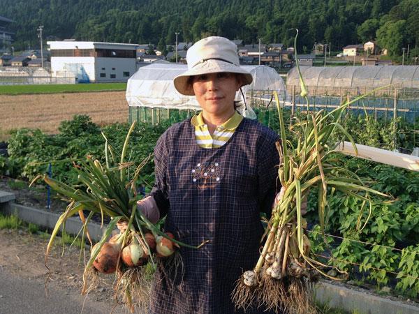 初収穫の玉ねぎとニンニク。この後、ジャガイモも初収穫した。