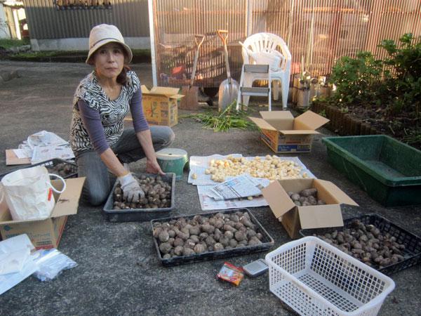 玄関先で収穫した「ふるさとの味(生姜と里芋)」の荷造り。