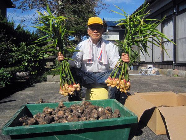 片瀬自慢の生姜と収穫した里芋。(家の前で)