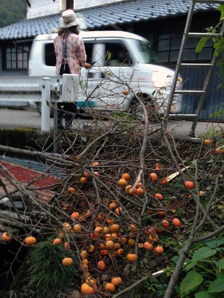 柿を取っているところへ市の広報車が「熊に注意して下さい」と言いながら通り過ぎていった。