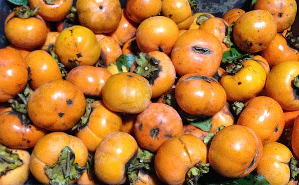 たくさん採れた柿。まだまだ食べきれないほどある。