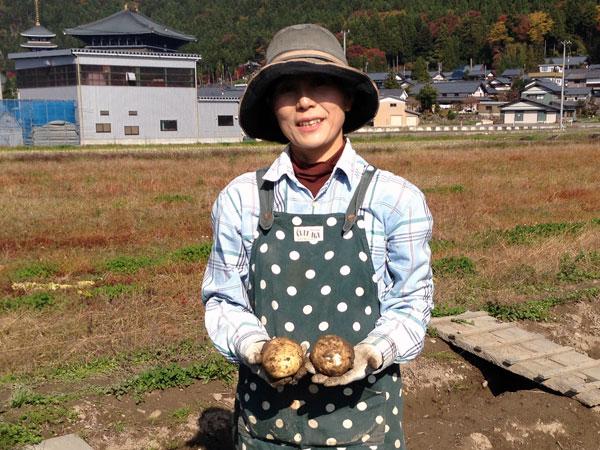 秋ジャガイモの試し掘り。でっかいじゃがいもが収穫できそうだ。