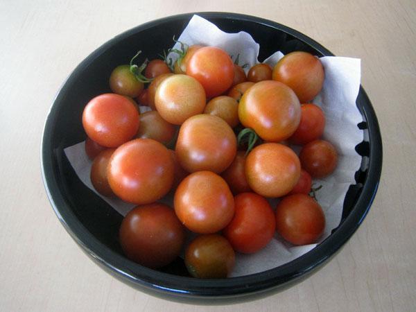 今日収穫できた我が家のトマト。夏野菜が今でも収穫できることはありがたい。