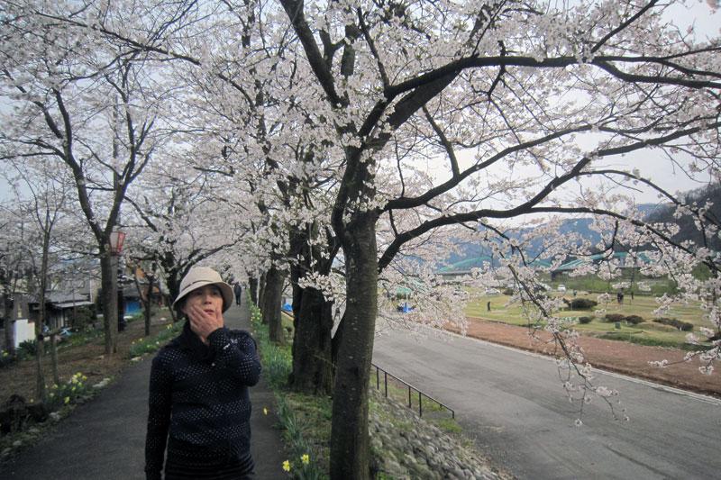 満開の弁天桜。多くの人が行き交っていた。