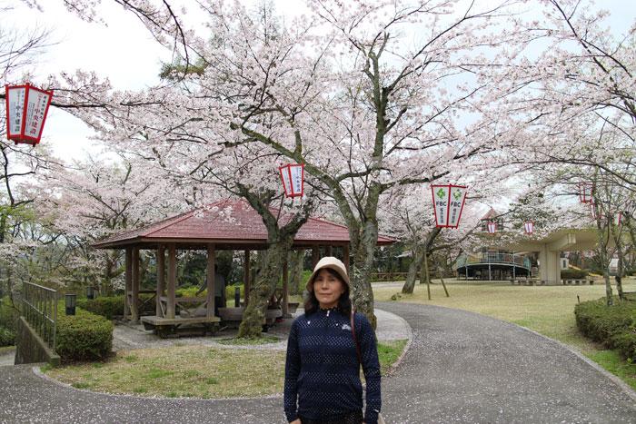 足羽山公園の桜。肌寒い日で昼前だったので人出は少なかった。