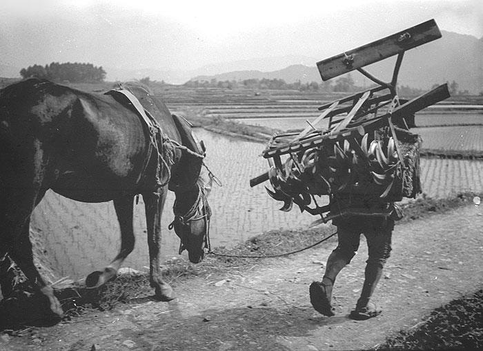 代掻きを終えて馬と共に家路へ向かう。