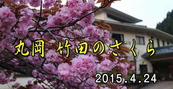 24 竹田の桜
