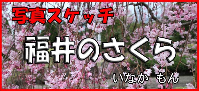 11 桜タイトル