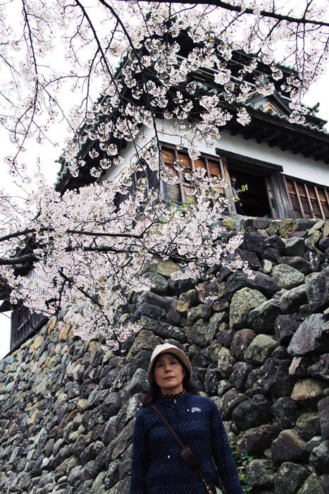 桜と丸岡城を一枚の写真に収めようとするとかなり苦労した。