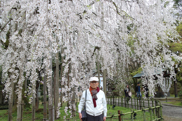 足羽神社のしだれ桜。駐車場係の人から勧められた。多くの人たちが記念写真を撮っていた。