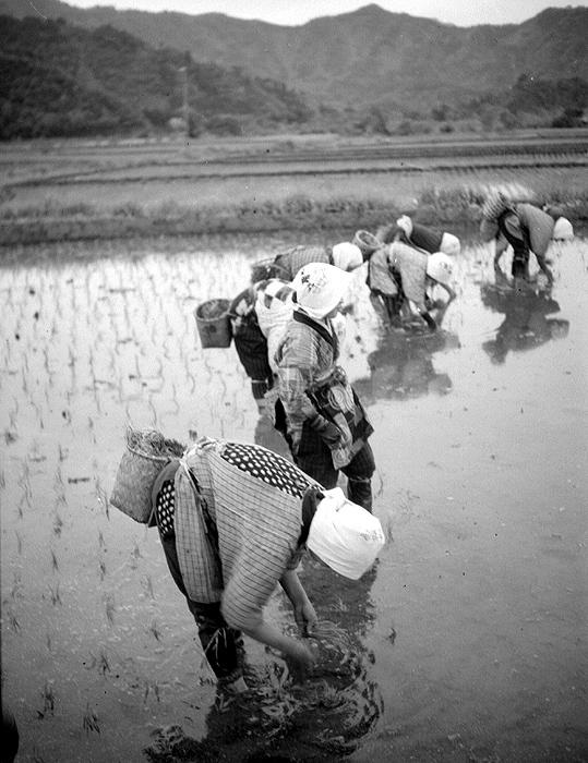 昭和時代の田植え風景