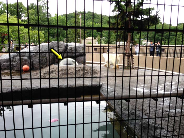 シロクマの檻の中に半球の透明ドームが設置されていて、ここからアザラシの視点でシロクマを見ることができる。