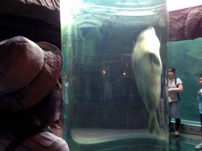 太いガラス管の中を上下するアザラシの姿は見応えがある。